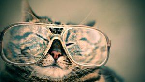 החבר הפרוותי שלך: מבט על תעשיית התכשיטים עבור חיות מחמד